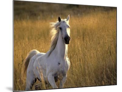 Horse Galloping, Half Moon Bay, California-Jerry Koontz-Mounted Photographic Print