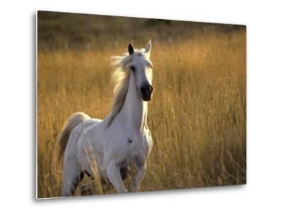 Horse Galloping, Half Moon Bay, California-Jerry Koontz-Metal Print
