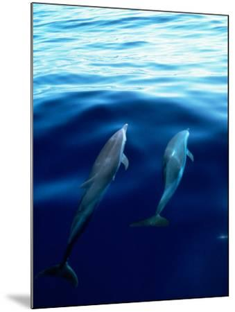 Overview of Dolphins Swimming Underwater-Stuart Westmorland-Mounted Photographic Print