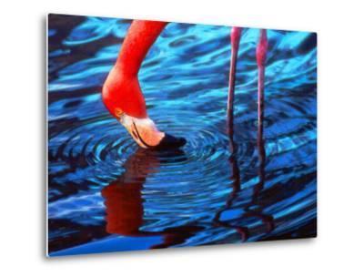 Flamingo, Florida-Pat Canova-Metal Print