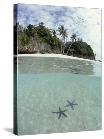 Above and Below View of Mangroves-Stuart Westmorland-Stretched Canvas Print