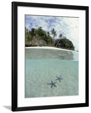 Above and Below View of Mangroves-Stuart Westmorland-Framed Photographic Print