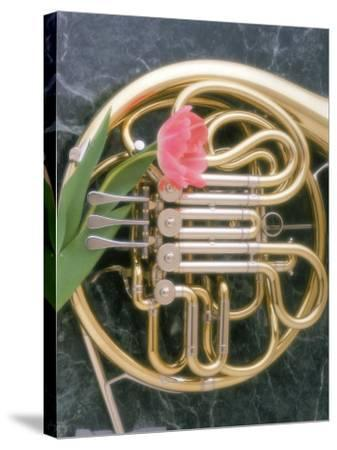 French Horn with a Tulip-Martin Fox-Stretched Canvas Print