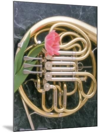 French Horn with a Tulip-Martin Fox-Mounted Photographic Print