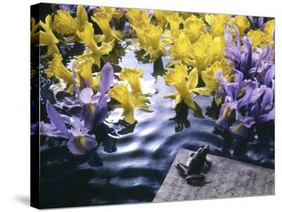 Frog, Sheet Music and Flowers in Water-Howard Sokol-Stretched Canvas Print