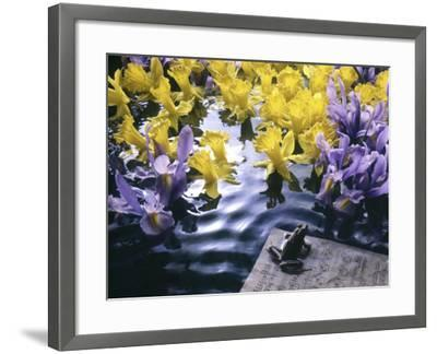 Frog, Sheet Music and Flowers in Water-Howard Sokol-Framed Photographic Print