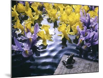 Frog, Sheet Music and Flowers in Water-Howard Sokol-Mounted Photographic Print