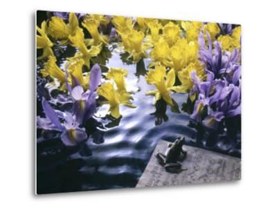 Frog, Sheet Music and Flowers in Water-Howard Sokol-Metal Print