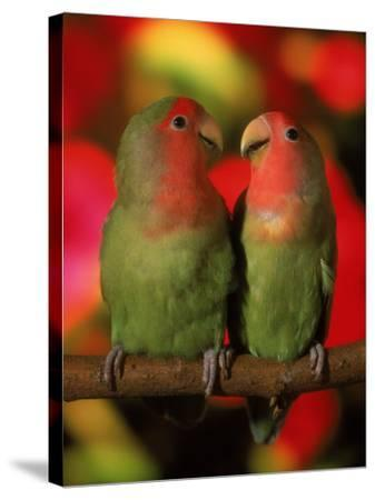 Two Parrots Perched on a Branch-Henryk T^ Kaiser-Stretched Canvas Print