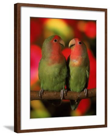 Two Parrots Perched on a Branch-Henryk T^ Kaiser-Framed Photographic Print