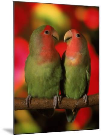 Two Parrots Perched on a Branch-Henryk T^ Kaiser-Mounted Photographic Print