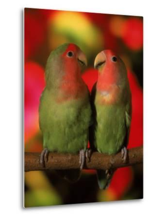 Two Parrots Perched on a Branch-Henryk T^ Kaiser-Metal Print