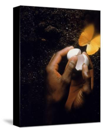 Hand with Egg Shell and Butterfly-Howard Sokol-Stretched Canvas Print