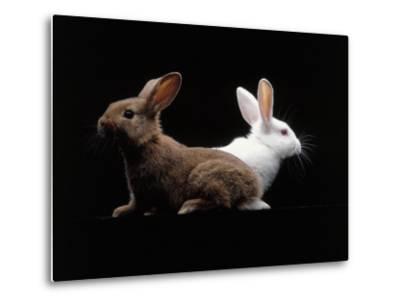 White and Brown Rabbit-Howard Sokol-Metal Print