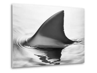 Shark Fin-Howard Sokol-Metal Print