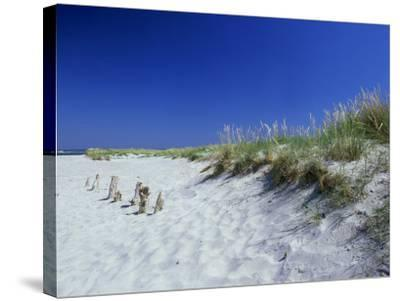 Sand Dunes and Marram Grass, West Sussex, UK-Ian West-Stretched Canvas Print