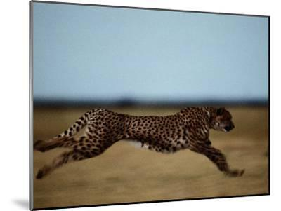 An African Cheetah Sprinting Across the an African Plain-Chris Johns-Mounted Photographic Print