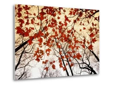 Bare Branches and Red Maple Leaves Growing Alongside the Highway-Raymond Gehman-Metal Print