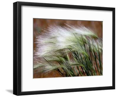 Prairie Grass-Raymond Gehman-Framed Photographic Print