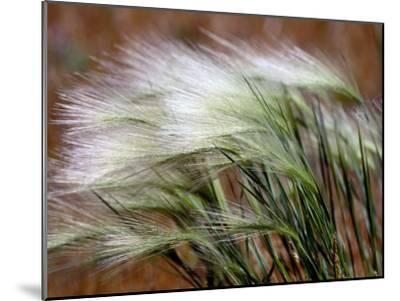 Prairie Grass-Raymond Gehman-Mounted Photographic Print
