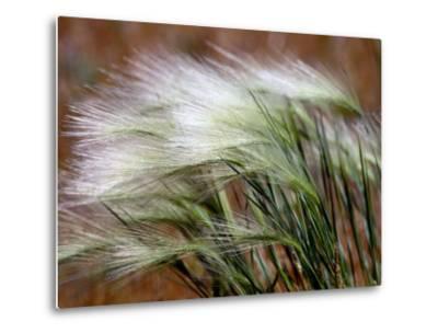 Prairie Grass-Raymond Gehman-Metal Print