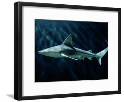 A Sand Bar Shark-George Grall-Framed Photographic Print