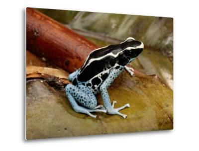 Poison-Dart Frog-George Grall-Metal Print