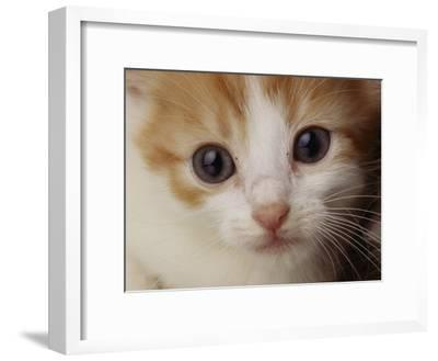 A Close View of a Cat-Michael Nichols-Framed Photographic Print