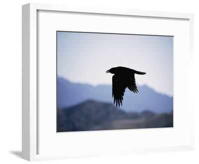 A Common Raven is Silhouetted against the Sky-Marc Moritsch-Framed Photographic Print