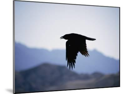 A Common Raven is Silhouetted against the Sky-Marc Moritsch-Mounted Photographic Print