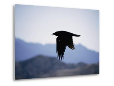 A Common Raven is Silhouetted against the Sky-Marc Moritsch-Metal Print