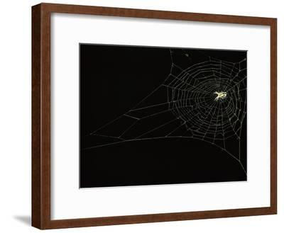 Orb Weaver Spider on its Web-Victor R^ Boswell, Jr-Framed Photographic Print