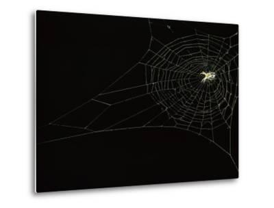 Orb Weaver Spider on its Web-Victor R^ Boswell, Jr-Metal Print