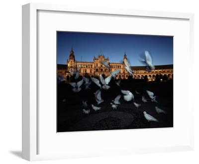 Pigeons in a Square in Seville-Steve Winter-Framed Photographic Print