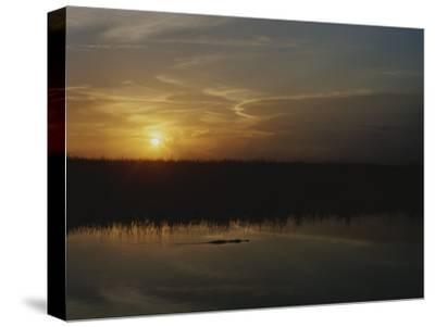 An Alligator in Silhouette Glides Through Wetlands at Sunset-Raul Touzon-Stretched Canvas Print
