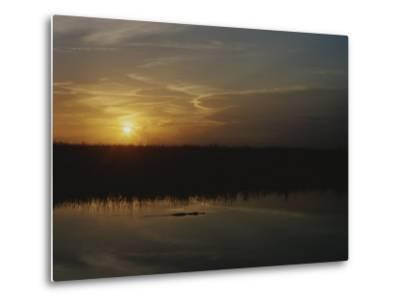 An Alligator in Silhouette Glides Through Wetlands at Sunset-Raul Touzon-Metal Print
