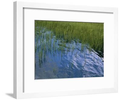 Rippling Water Among Aquatic Grasses in a Marsh-Heather Perry-Framed Photographic Print