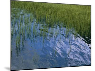 Rippling Water Among Aquatic Grasses in a Marsh-Heather Perry-Mounted Photographic Print
