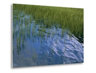 Rippling Water Among Aquatic Grasses in a Marsh-Heather Perry-Metal Print
