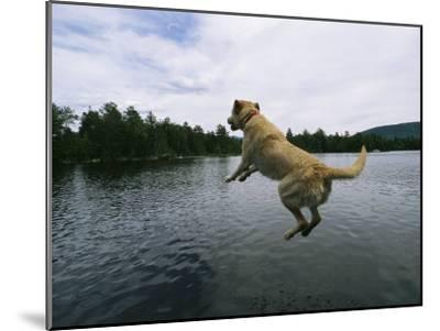 A Yellow Labrador Retriever Jumps into a Lake-Heather Perry-Mounted Photographic Print