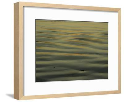 Sunlight Reflects off of Sand Ripples on a Tidal Flat in Tasmania-Jason Edwards-Framed Photographic Print