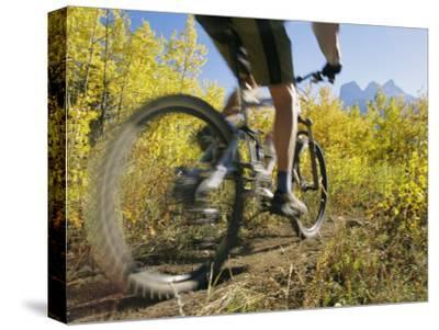 Cyclist Rides Mountain Bike Among Trees with Autumn Foliage-Mark Cosslett-Stretched Canvas Print