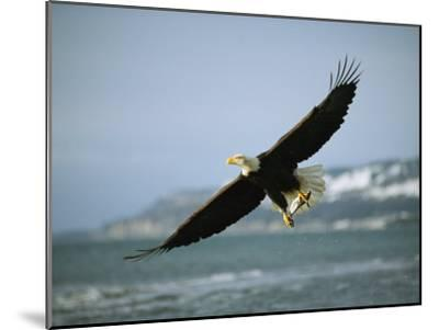 An American Bald Eagle in Flight over Water with a Fish in its Talons-Klaus Nigge-Mounted Photographic Print