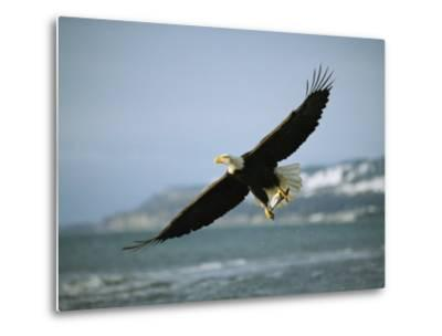 An American Bald Eagle in Flight over Water with a Fish in its Talons-Klaus Nigge-Metal Print