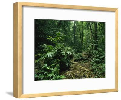 Lush Woodland View in Papua New Guinea-Klaus Nigge-Framed Photographic Print