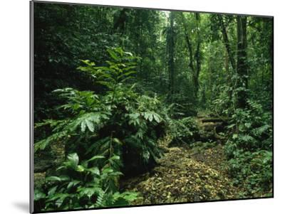 Lush Woodland View in Papua New Guinea-Klaus Nigge-Mounted Photographic Print