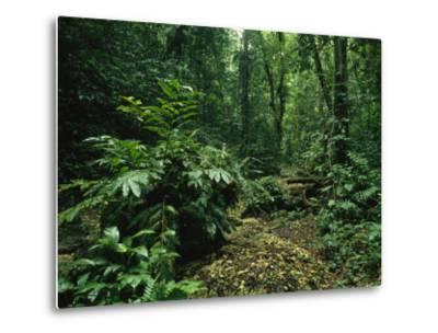 Lush Woodland View in Papua New Guinea-Klaus Nigge-Metal Print