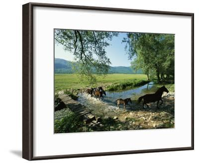Wild Horses Cross a Stream on a High Plain Surrounded by Mountains-O^ Louis Mazzatenta-Framed Photographic Print