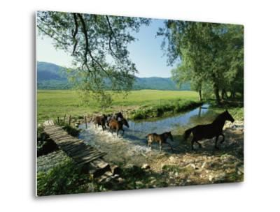Wild Horses Cross a Stream on a High Plain Surrounded by Mountains-O^ Louis Mazzatenta-Metal Print