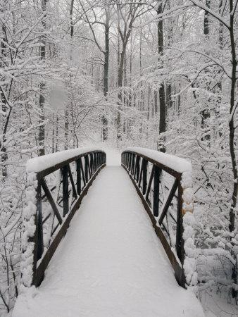 A View of a Snow-Covered Bridge in the Woods-Richard Nowitz-Photographic Print